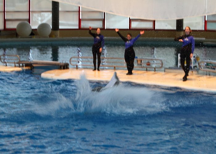 Inner Greeting Card featuring the photograph Dolphin Show - National Aquarium In Baltimore Md - 1212278 by DC Photographer