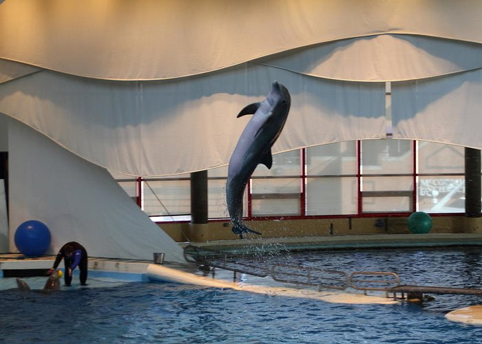 Inner Greeting Card featuring the photograph Dolphin Show - National Aquarium In Baltimore Md - 121255 by DC Photographer
