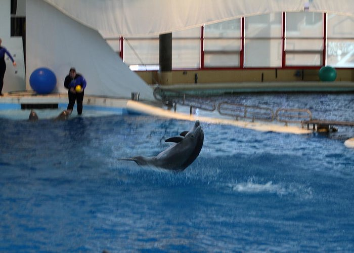 Inner Greeting Card featuring the photograph Dolphin Show - National Aquarium In Baltimore Md - 121258 by DC Photographer