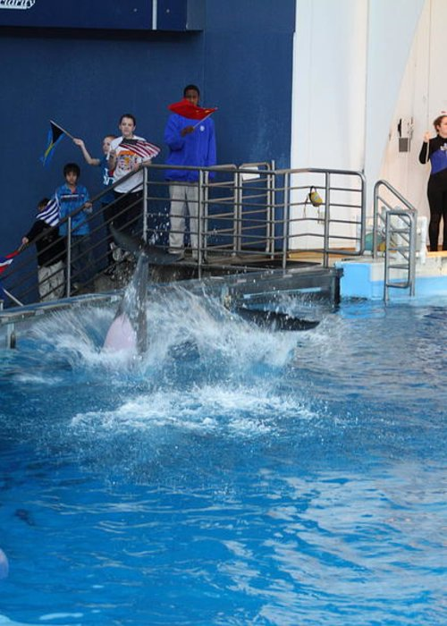 Inner Greeting Card featuring the photograph Dolphin Show - National Aquarium In Baltimore Md - 121292 by DC Photographer