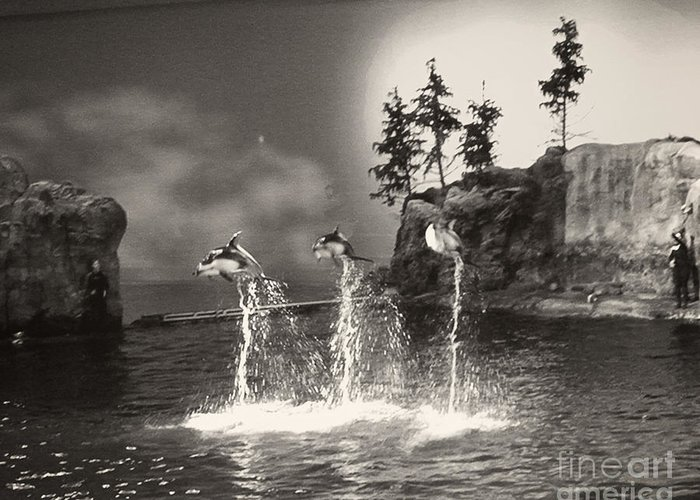 Dolphin Greeting Card featuring the photograph Dolphin Trio by Emily Kelley