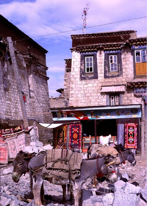 Tibet Greeting Card featuring the photograph Donkeys In Jokhang Bazaar by Anna Lisa Yoder