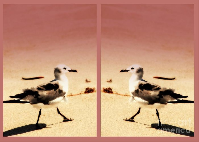 Double Gulls Greeting Card featuring the photograph Double Gulls Collage by Susanne Van Hulst