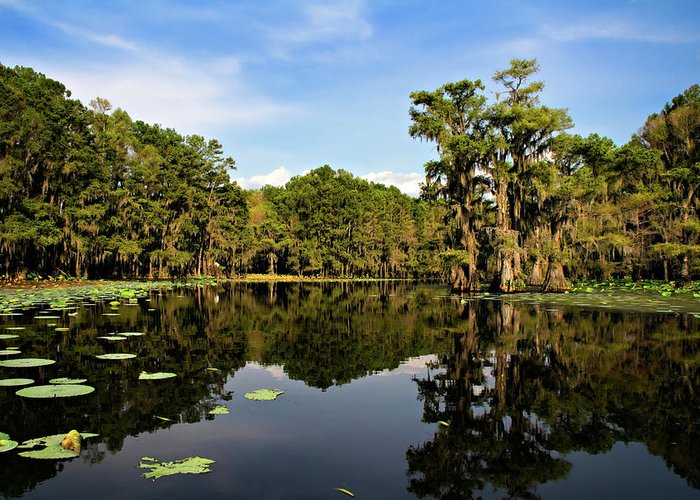 Algae Greeting Card featuring the photograph Down In The Bayou by Lana Trussell