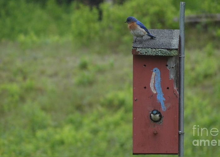 Bluebirds Greeting Card featuring the photograph Down Time by Russell Mckenney