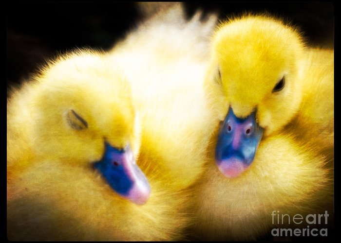 Ducklings Greeting Card featuring the photograph Downy Ducklings by Edward Fielding