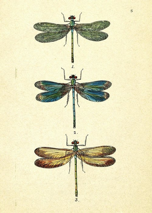 Dragonflies Drawings Greeting Cards