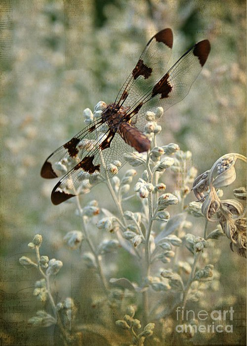 Striped Dragon Fly Greeting Cards
