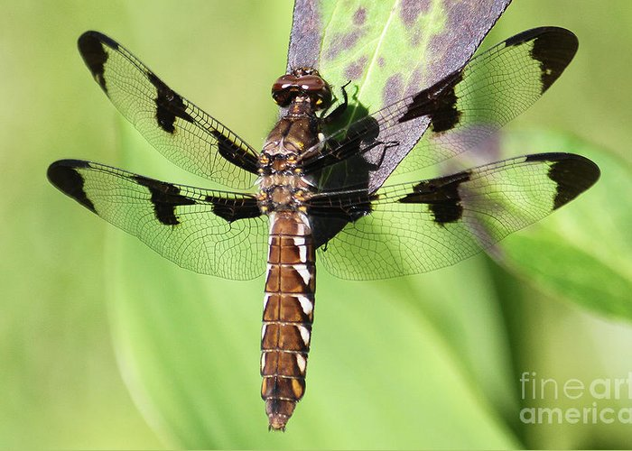 Dragonfly Greeting Card featuring the photograph Dragonfly by Emma England
