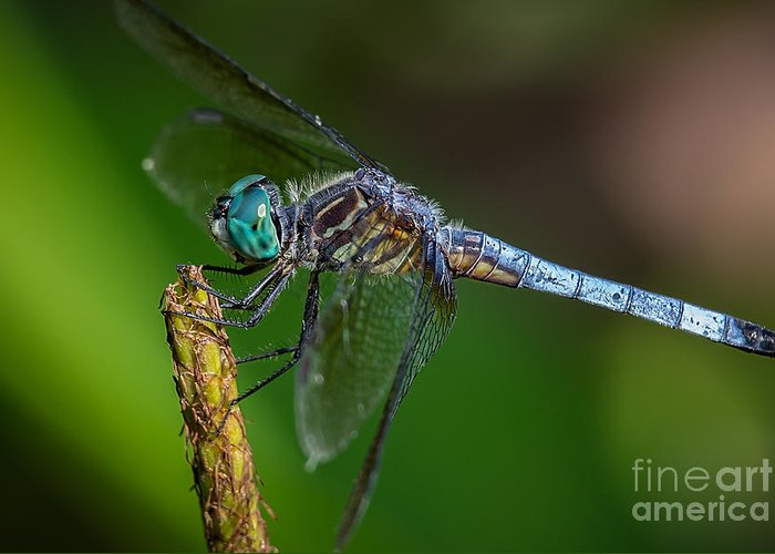 Dragonfly Greeting Card featuring the photograph Dragonfly Having Summer Fun by Deborah Scannell