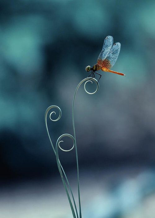 Macro Greeting Card featuring the photograph Dragonfly by Ridho Arifuddin