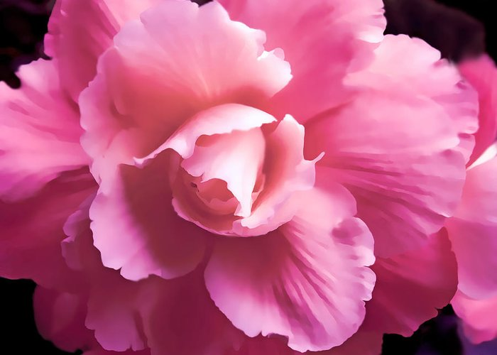 Begonia Greeting Card featuring the photograph Dramatic Pink Begonia Floral by Jennie Marie Schell