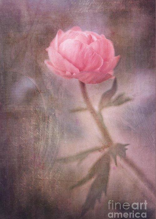Ranunculus Greeting Card featuring the photograph Dream-struck by Priska Wettstein