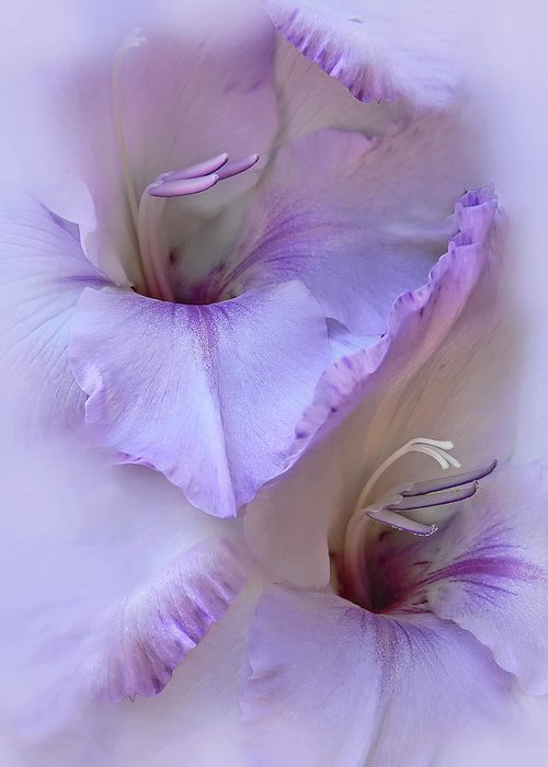 Gladiola Greeting Card featuring the photograph Dreams Of Purple Gladiola Flowers by Jennie Marie Schell