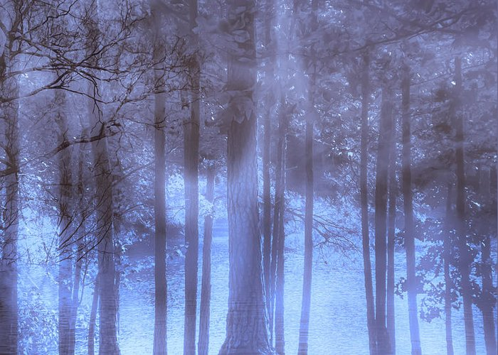 Dream Greeting Card featuring the photograph Dreamy Forest by Scott Hervieux