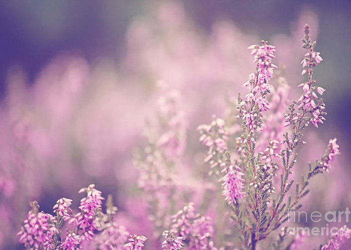 Pink Greeting Card featuring the photograph Dreamy Pink Heather by Natalie Kinnear