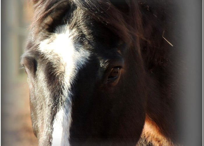 Horse Greeting Card featuring the photograph Dreamy Rowdy by Rabiah Seminole