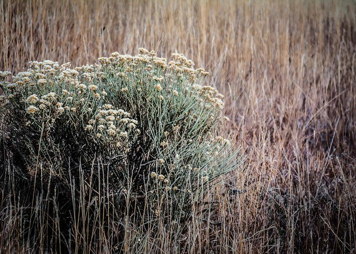 Colorado Greeting Card featuring the photograph Dried Wildflowers by Karen Saunders