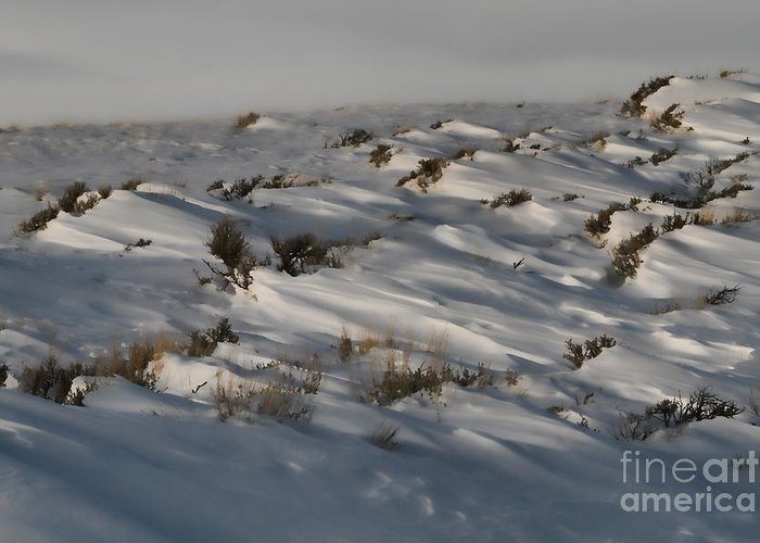 Snow Greeting Card featuring the photograph Drifting Around by Edward R Wisell