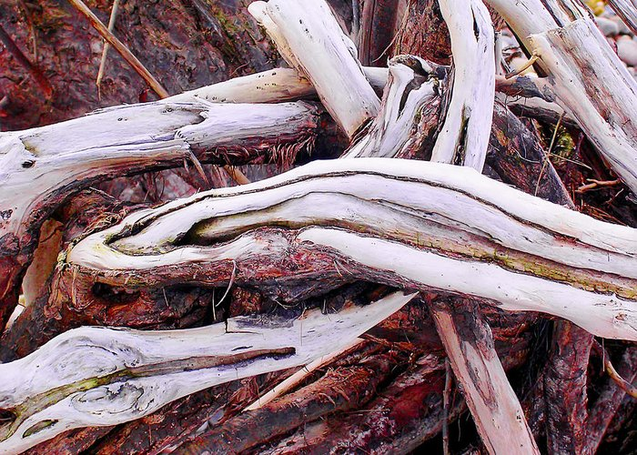 Driftwood Greeting Card featuring the photograph Driftwood by Paul Williams