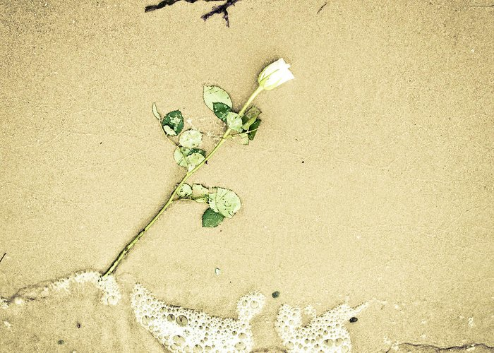 Abandoned Greeting Card featuring the photograph Dropped Flower by Tom Gowanlock