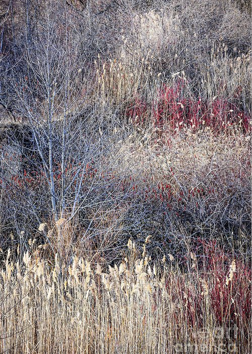 Grasses Greeting Card featuring the photograph Dry Grasses And Bare Trees by Elena Elisseeva