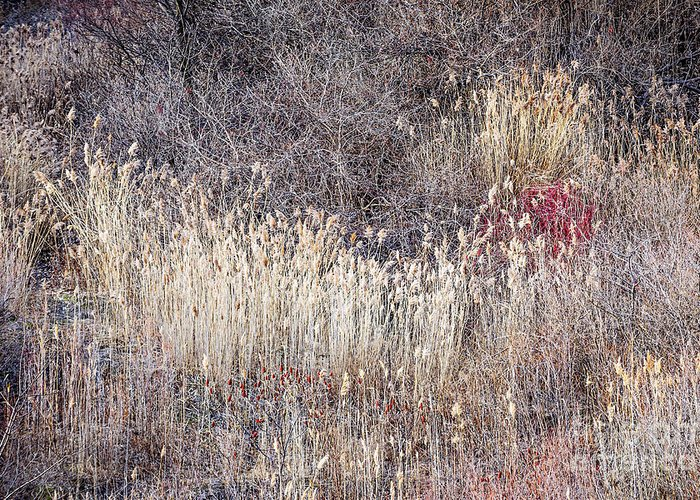 Grasses Greeting Card featuring the photograph Dry Grasses And Bare Trees In Winter Forest by Elena Elisseeva