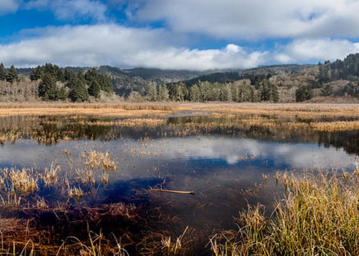 Reflections Greeting Card featuring the photograph Dry Lagoon In Winter Panorama by Greg Nyquist