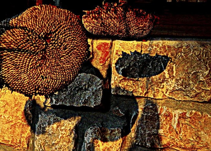 Earthy Greeting Card featuring the photograph Drying Out by Chris Berry