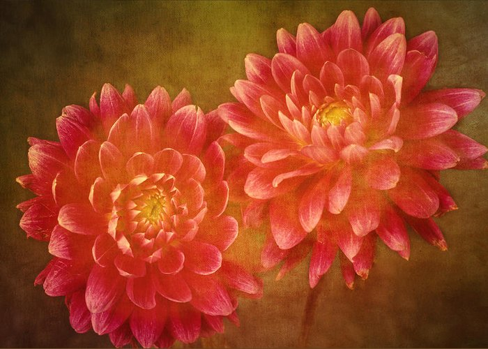Fine Greeting Card featuring the photograph Dual Dahlias by Keith Gondron