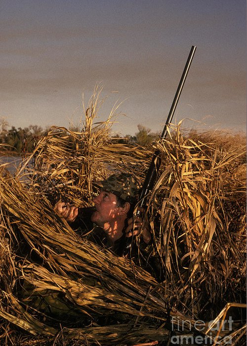 Sport Greeting Card featuring the photograph Duck Hunter In Blind by Ron Sanford