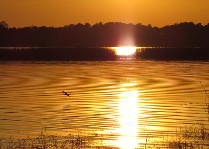 Duck On Sunset Greeting Card featuring the photograph Duck On Sunset by Zina Stromberg