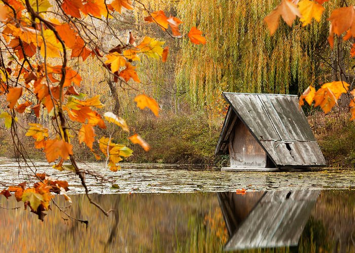 Dawn Greeting Card featuring the photograph Duck's House by Evgeni Dinev