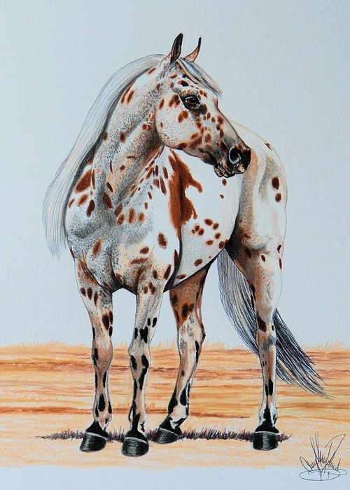 Appaloosa Greeting Card featuring the drawing Duke's Go Hancock by Cheryl Poland
