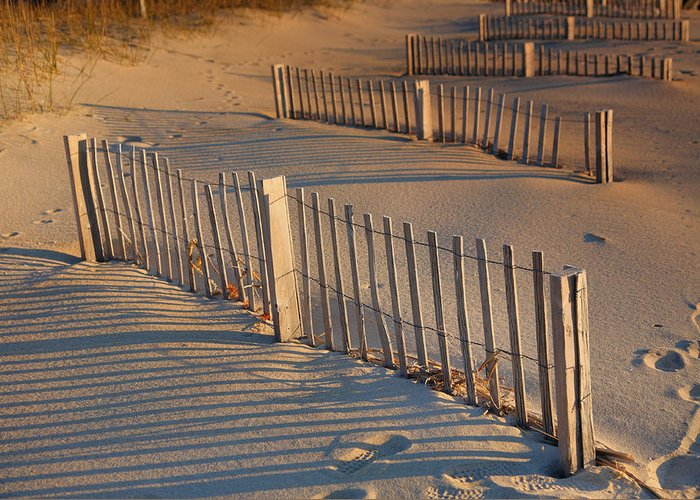 Fence Greeting Card featuring the photograph Dune Fences Early Morning by Steven Ainsworth