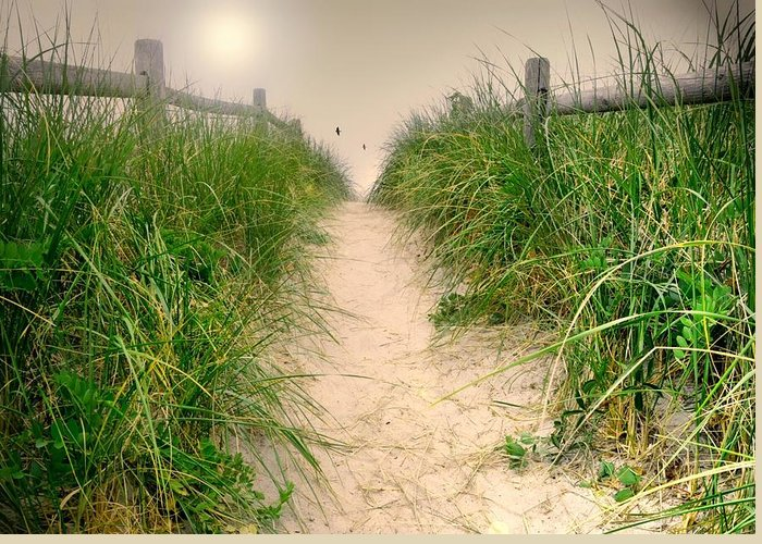 Landscape Greeting Card featuring the photograph Dunes Catch Light by Diana Angstadt