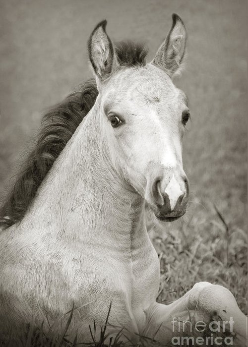 Horse Greeting Card featuring the photograph Dunn Filly by Donna Cloutier