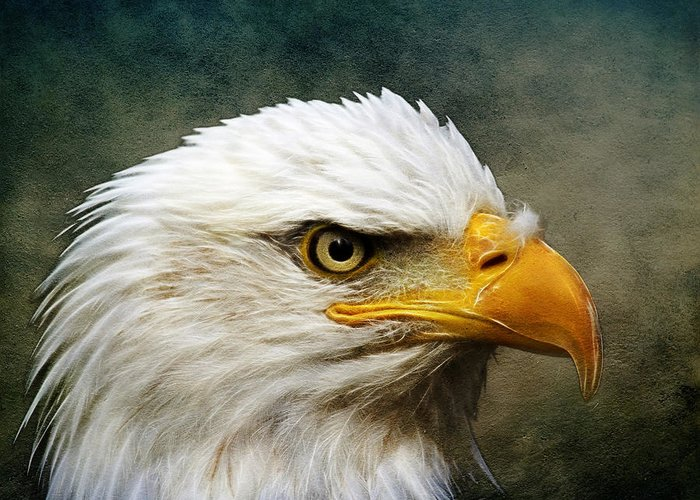 Bald Eagle Greeting Card featuring the photograph Eagle Art by Steve McKinzie
