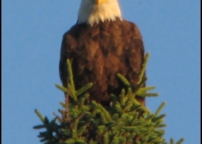 Greeting Card featuring the photograph Eagle Eye by Matthew Barton