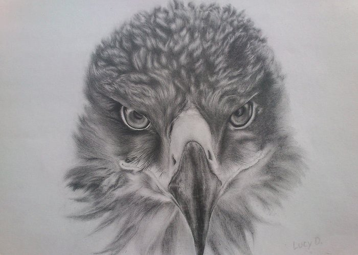 Eagle Greeting Card featuring the drawing Eagle by Lucy D