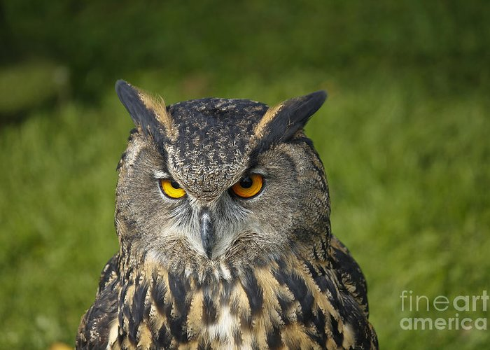 Clare Bambers Greeting Card featuring the photograph Eagle Owl by Clare Bambers