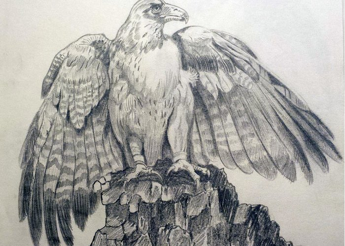 Pencil Sketch Greeting Card featuring the painting Eagle Sketch by Prashanti Nekkanti