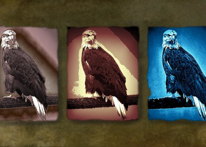 Eagles Greeting Card featuring the photograph Eagle Triad by Peter Hogg