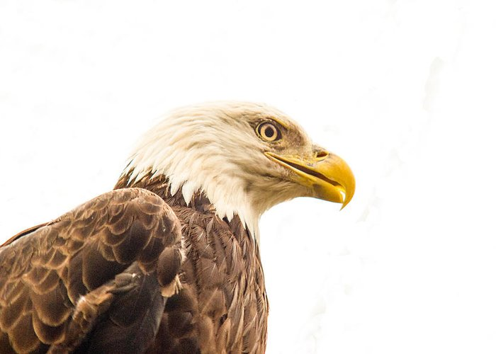 Eagle Greeting Card featuring the photograph Eagle With Prey Spied by Douglas Barnett