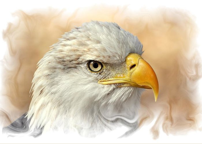 Eagle. American Bald Eagle Greeting Card featuring the photograph Eagle6 by Marty Koch