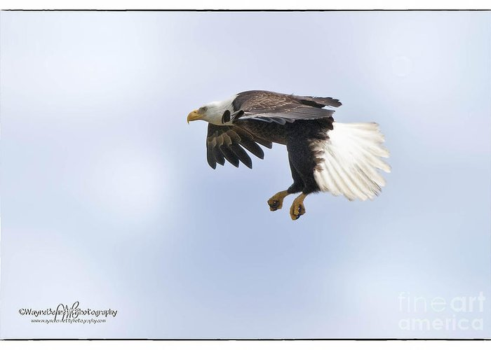 American Greeting Card featuring the photograph Eaglelanding Approach by Wayne Bennett