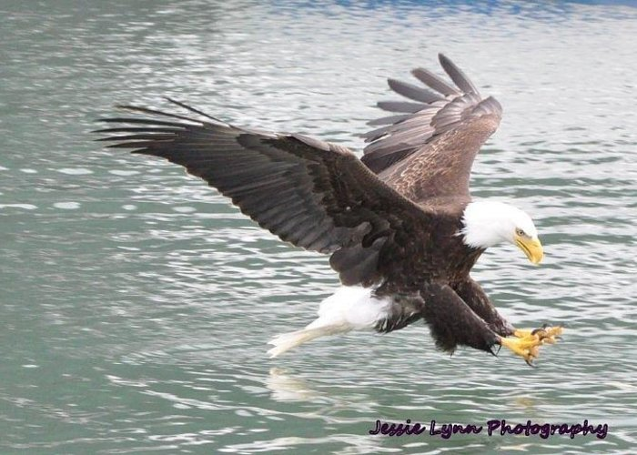 Bald Greeting Card featuring the photograph Eagle's Grasp by Jessie Lynn