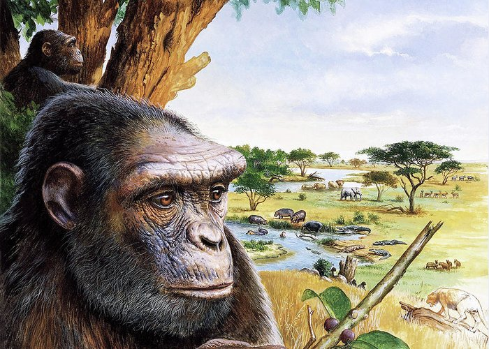 Toumai Greeting Card featuring the photograph Early Hominid by Christian Jegou Publiphoto Diffusion/ Science Photo Library