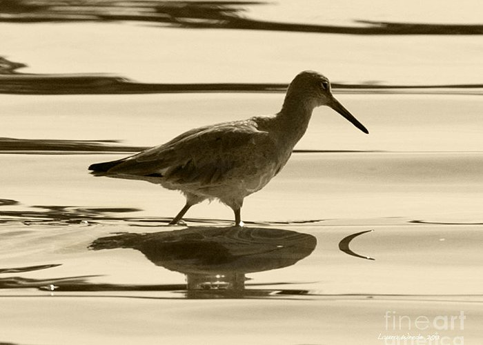 Gaviota Greeting Card featuring the photograph Early Morning In The Moss Landing Harbor Picture Of A Willet by Artist and Photographer Laura Wrede