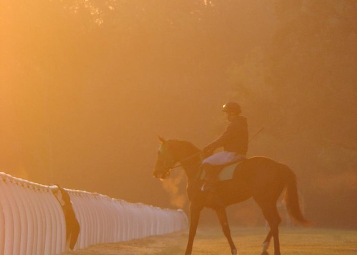 Thoroughbred Greeting Card featuring the photograph Early Morning Work by Jennifer Irwin